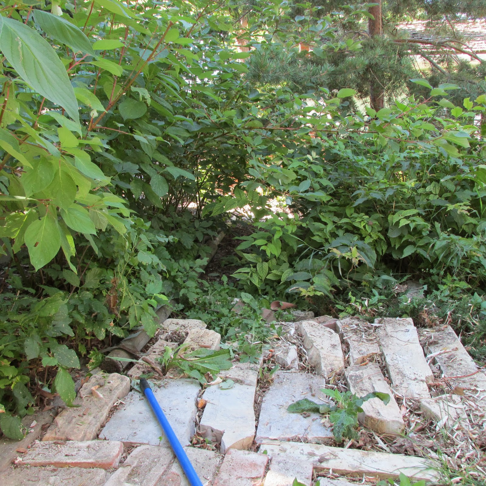 Remove Invasive Plants As Part Of Your Fall Clean Up Plan