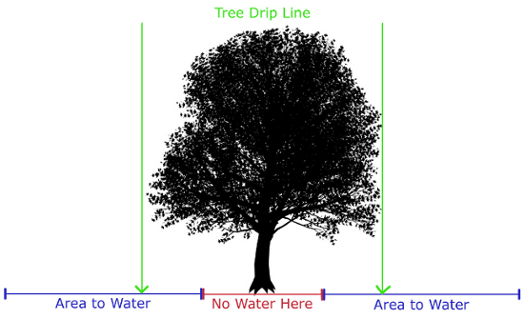 how-much-watering-trees