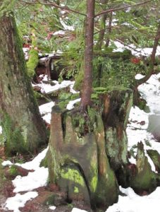 life comes from death - BC Forest walk